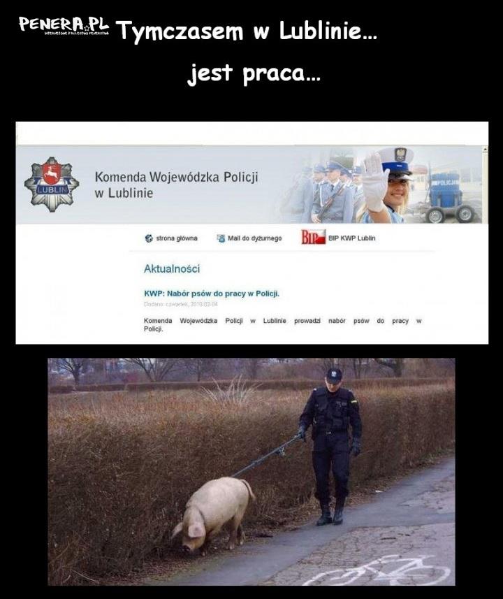 W Lublinie potrzebują do pracy :D