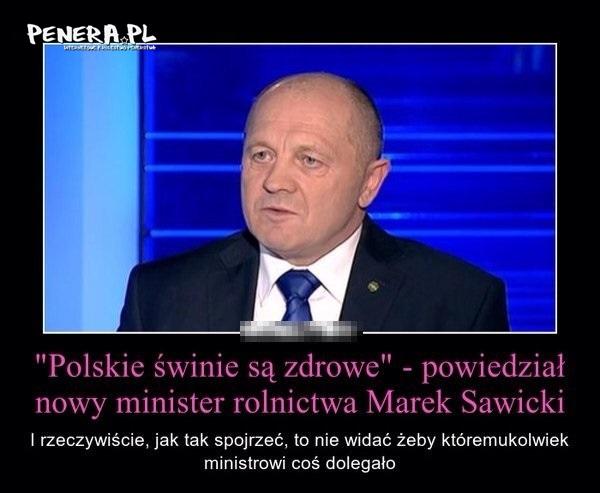 Polskie świnie są zdrowe